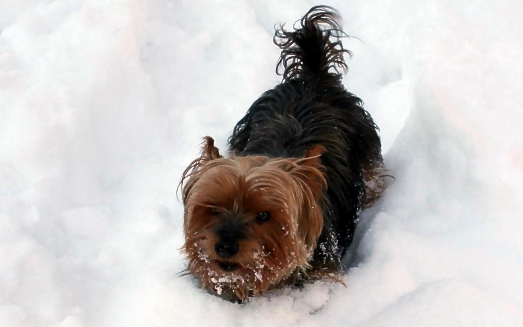 kostenlose hunde bilder