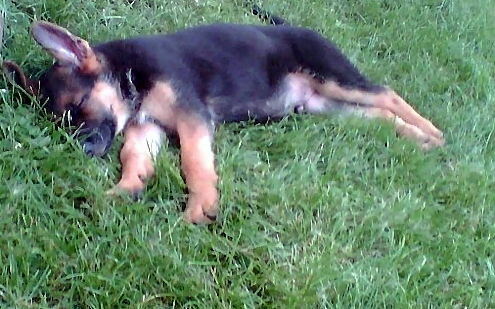Hundebilder Hunde - kostenlose freie Bilder download