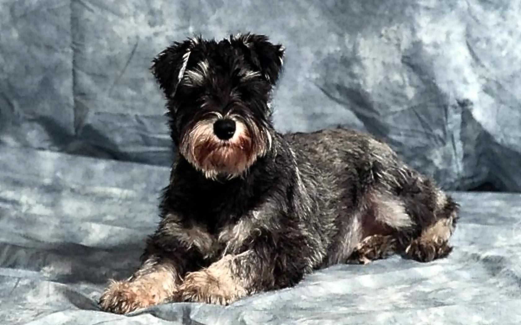 Bilder kostenlos Hunde Hund