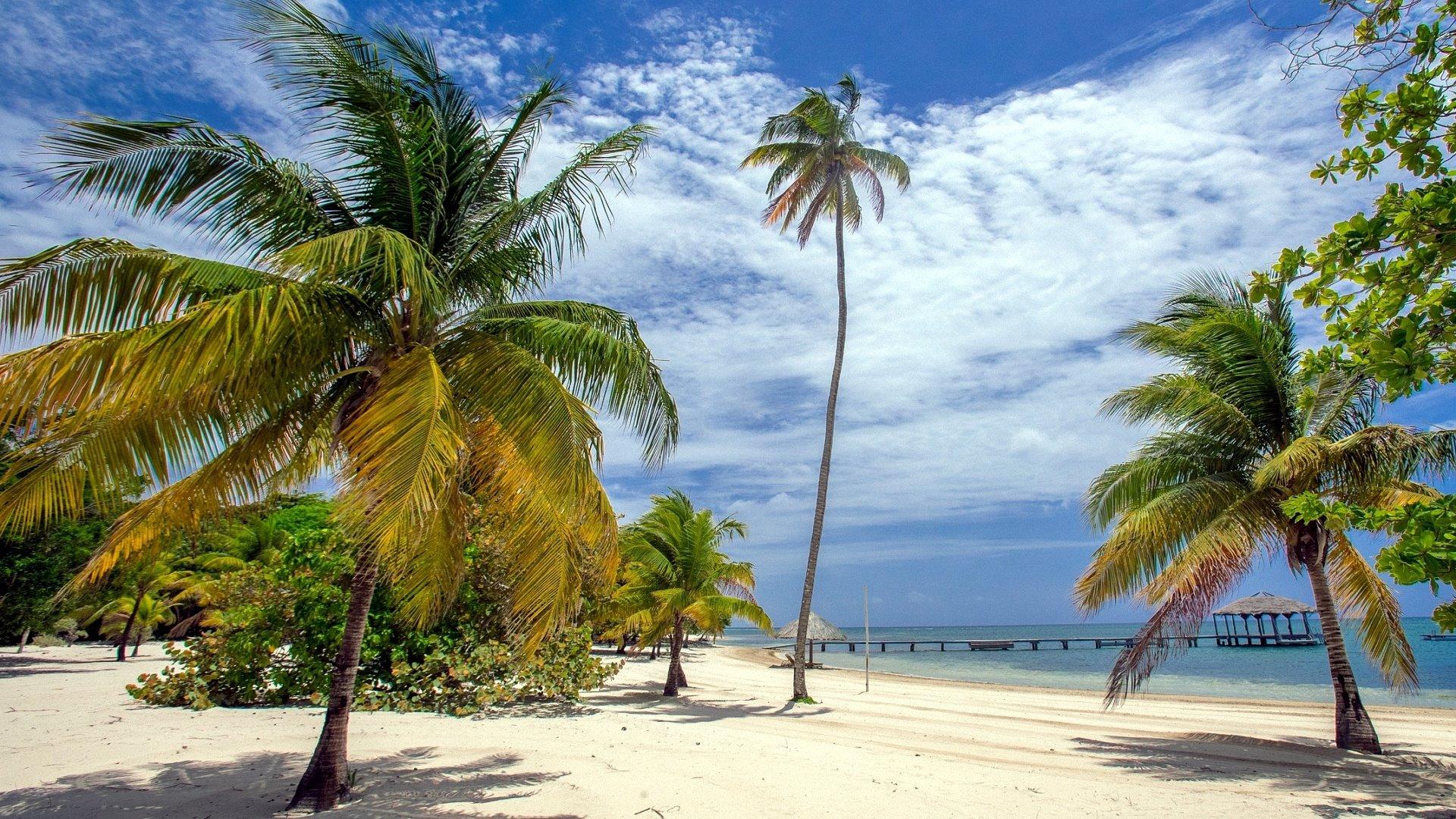 Bilder Palmenstrand Karibik