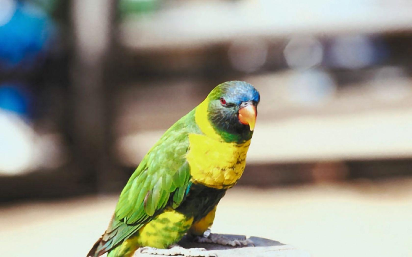 Bilder Vogel Gratis