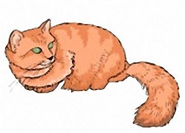 Katzen Bilder Window Color