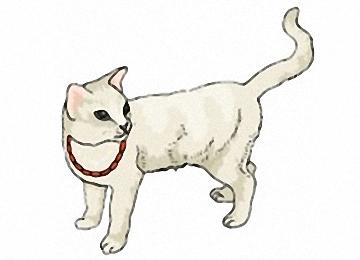 Katzen Bilder Zum Ausdrucken