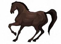 pferde bilder zum ausmalen