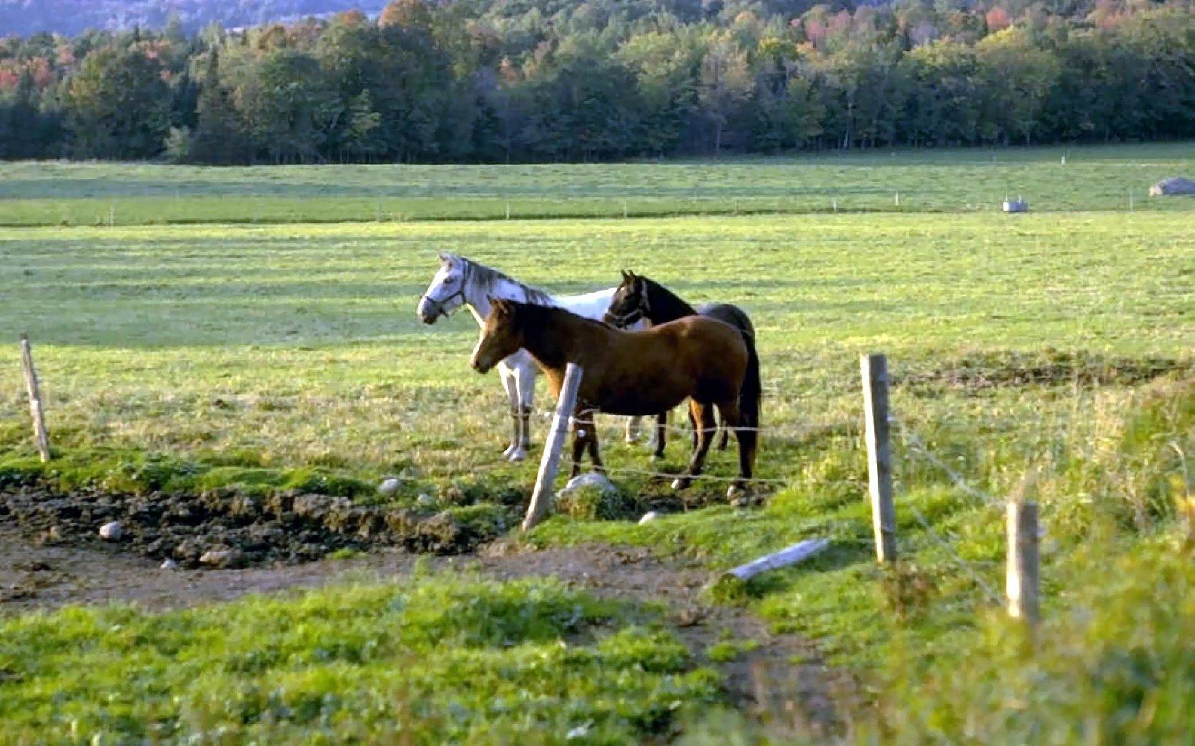 Pferdebilder : pferd 09 from www.bilder-kostenlose.de size 1680 x 1050 jpeg 327kB