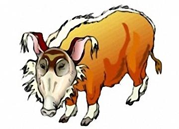 Pinselohrschwein Bilder Zum Ausmalen