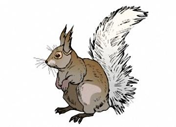 Eichhörnchen Bilder Zum Ausdrucken